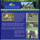 website - Blue Maples Bed & Breakfast